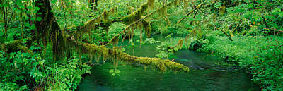 Olympic National Park Photograph - Stream Flowing Through A Rainforest by Panoramic Images