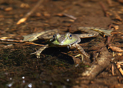 Photograph - Stream Frog by Dawn J Benko