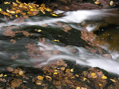 Photograph - Stream In Fall by Robert Lozen