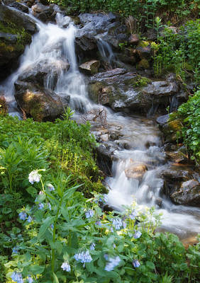 Photograph - Stream In The Wasatch Mountains Of Utah by Utah Images