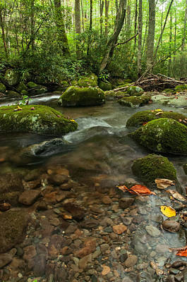 Art Print featuring the photograph Stream With The Color Of Early Fall. by Debbie Green