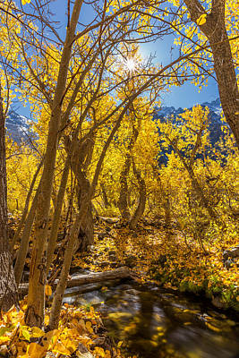 Photograph - Streams Of Gold by Tassanee Angiolillo