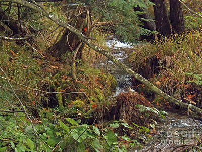 Photograph - Streams Of Time by Brenda Brown