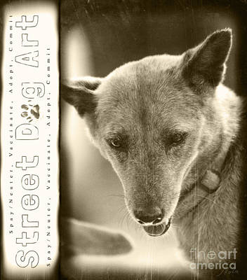 Photograph - Street Dog Art #2 by Nola Lee Kelsey