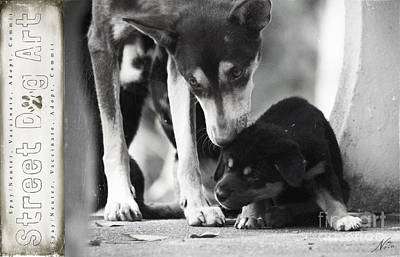 Photograph - Street Dog Art #6 by Nola Lee Kelsey