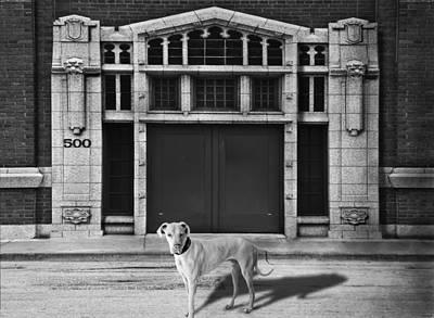 Street Dog Art Print by Larry Butterworth