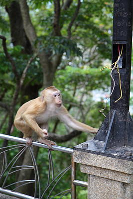 Monkey Photograph - Street Monkey - Phuket Thailand - 01136 by DC Photographer