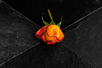 Art Print featuring the photograph Street Rose by Marwan Khoury