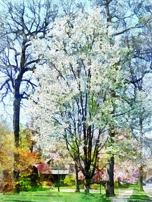 Street With White Flowering Trees Art Print by Susan Savad