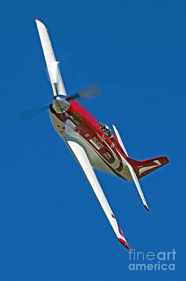 Reno Air Races Photograph - Strega Racing- P51 by Steve Rowland