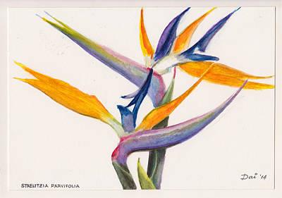 Strelitzia Painting - Strelitzia Flowers by Dai Wynn