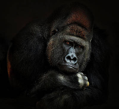 Ape Wall Art - Photograph - Strength In Serenity by Antje Wenner-braun