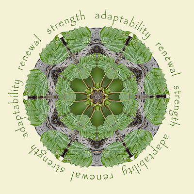 Photograph - Strength Mandala 1 by Beth Sawickie