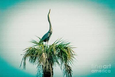 Stretching Heron Art Print by Bob and Nancy Kendrick