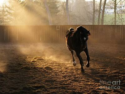 Galop Photograph - Stretching The Legs by Brothers Beerens