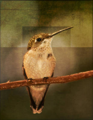 Strike A Hummingbird Pose Art Print