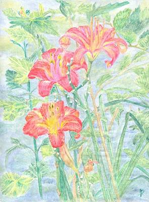 Day Lily Drawing - String Of Pearls by David Addams