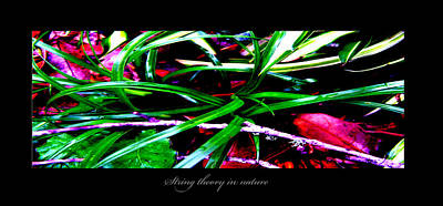 Photograph - String Theory In Nature by Richard Erickson