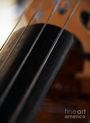 Bass Cello Photograph - Stringed by Glennis Siverson