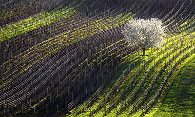 Czech Republic Photograph - Strings Of Spring by Vlad Sokolovsky