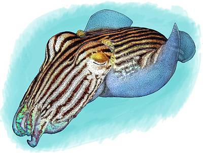 Photograph - Striped Pyjama Squid by Roger Hall