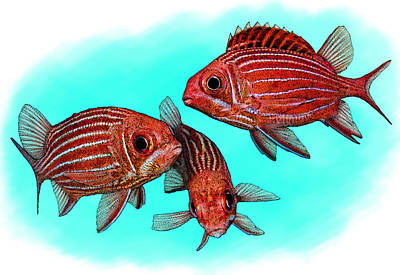 Photograph - Striped Squirrelfish by Roger Hall