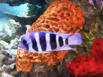 Photograph - Striped Tropical Fish Frontosa by Susan Savad