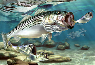 Painting - Striper - The True Monster Of Montauk by Hayden Hammond