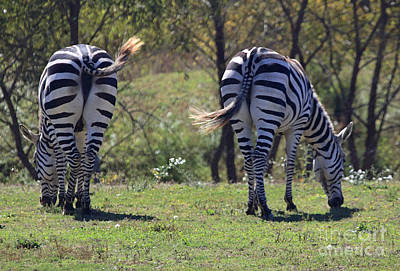 Photograph - Stripes And Tails by Mary Haber