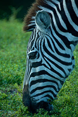 Photograph - Stripes by Kathi Isserman