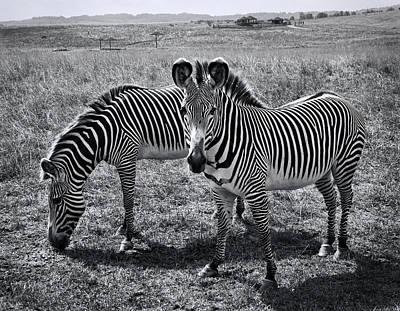 Stripes Duo Art Print