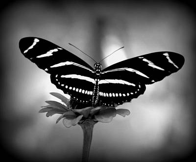 Photograph - Stripped In Black And White by Sheri McLeroy