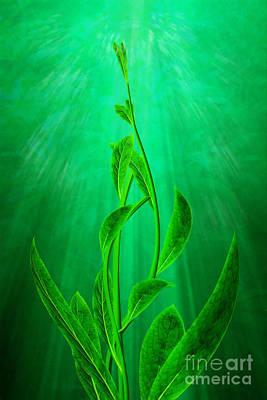 Twine Digital Art - Striving by John Edwards