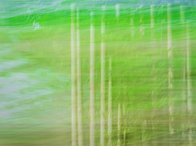 Photograph - Strokes Of Nature by Carolyn Marshall