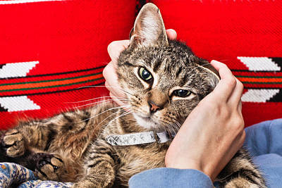 Tabby Photograph - Stroking A Cat by Tom Gowanlock