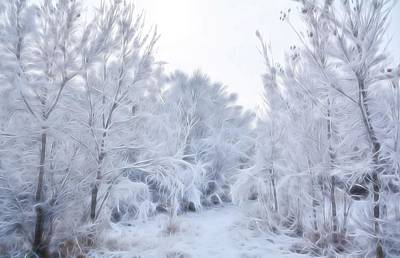 Photograph - Stroll Through A Winter Wonderland by Diane Alexander