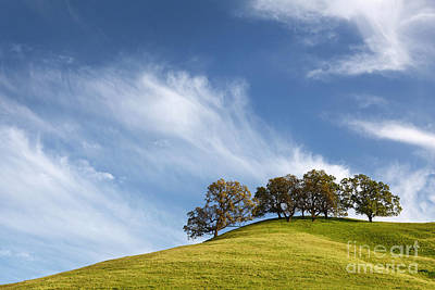 Stroll Up The Hill And Relax In The Shade 2014 Art Print by Benjamin Race - Arc of Light Photography