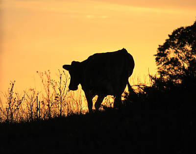 Art Print featuring the photograph Strolling Into The Sunset by Penny Meyers