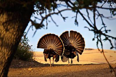 Male Turkey Photograph - Strutten Their Stuff by Beth Sargent