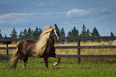 Forelock Photograph - Struttin' D4495 by Wes and Dotty Weber
