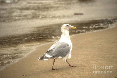Golden Gate Bridge Photograph - Strutting Gull by Deborah Smolinske