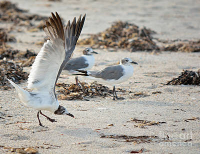 Photograph - Strutting Seagull On The Beach by Patricia Twardzik