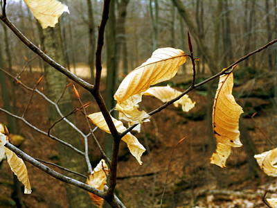 Art Print featuring the photograph Stubborn Leaves by Jackie Carpenter