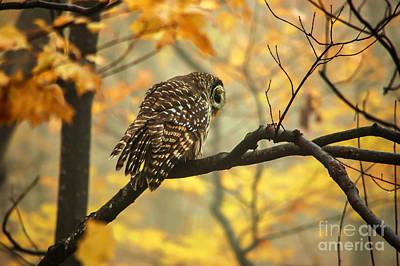 Stubborn Owl Art Print