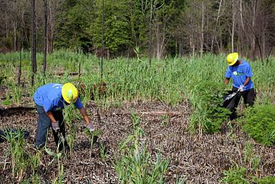 Weeding Photograph - Students Removing Invasive Plants by Jim West