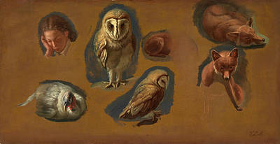 Studies Of A Fox, A Barn Owl, A Peahen, And The Head Art Print by Litz Collection