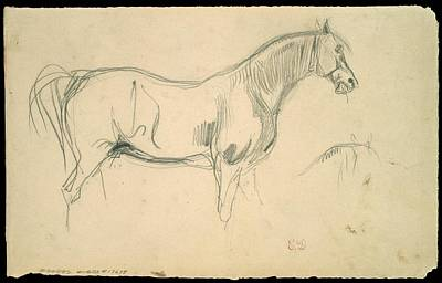 Studies Of A Horse In Profile Art Print by Eug�ne Delacroix