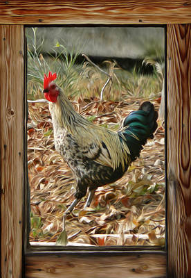 Photograph - Studio Window Rooster by Barbara St Jean