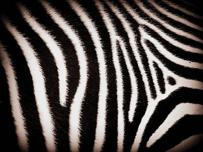 Photograph - Study In Stripes Number One by Ramona Johnston