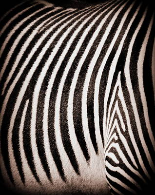 Photograph - Study In Stripes Number Two by Ramona Johnston